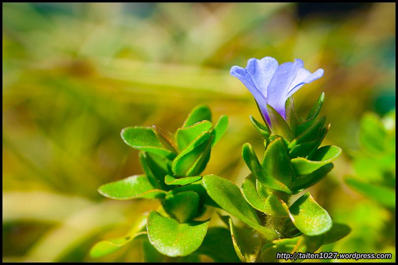 微距植物-002.jpg (810×540)
