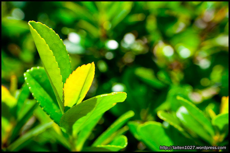微距植物-005.jpg (810×540)