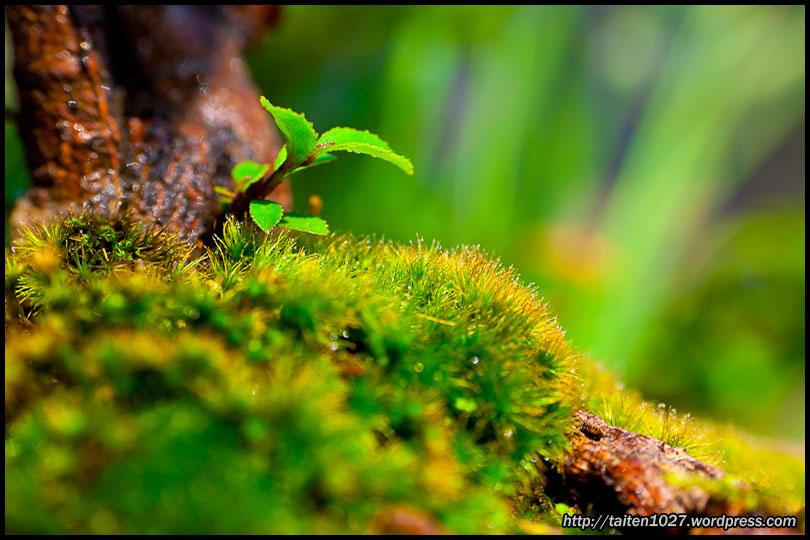 微距植物-003.jpg (810×540)