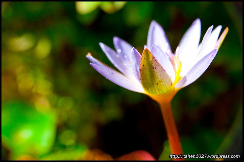 微距植物-007.jpg (810×540)