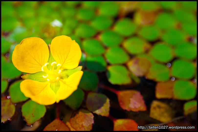 微距植物-004.jpg (810×540)