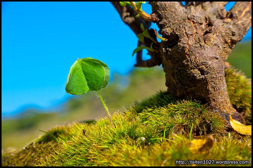 微距植物-01.jpg (810×540)